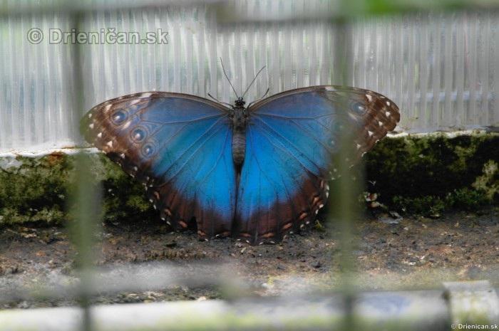 Tropicke motyle v botanickej zahrade Kosice_40