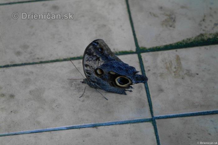 Tropicke motyle v botanickej zahrade Kosice_41