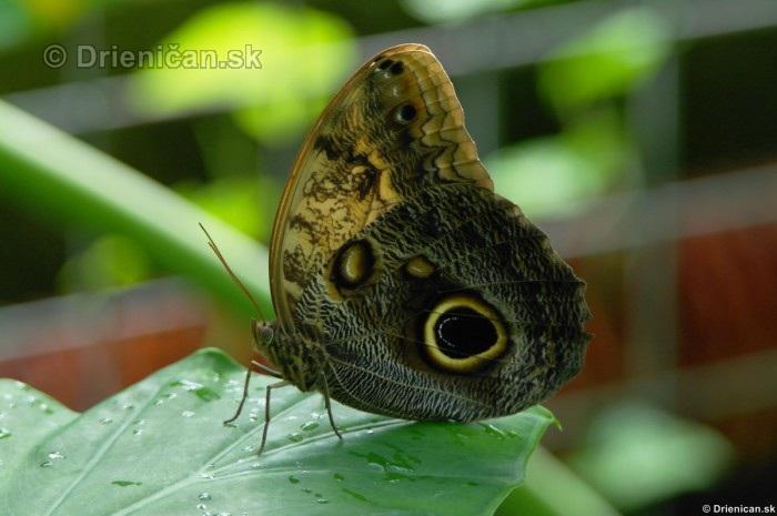 Tropicke motyle v botanickej zahrade Kosice_42