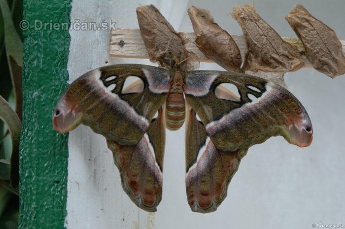Tropicke motyle v botanickej zahrade Kosice_43