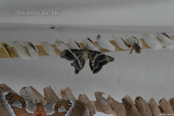 Tropicke motyle v botanickej zahrade Kosice_47