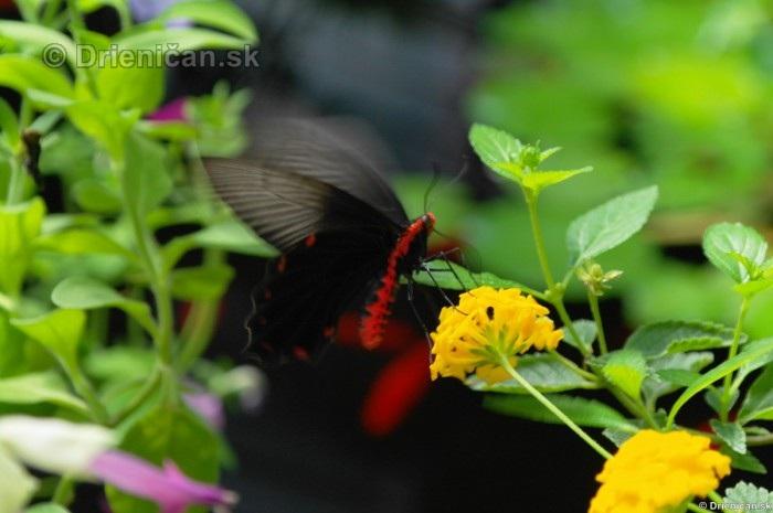 Tropicke motyle v botanickej zahrade Kosice_50
