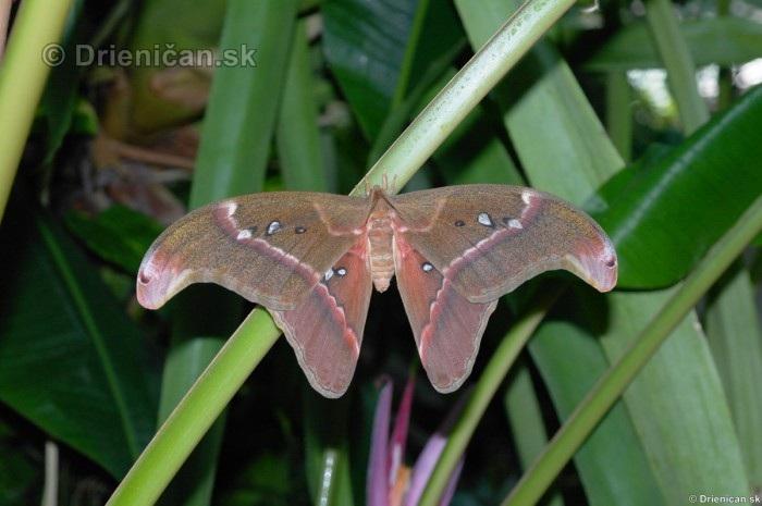 Tropicke motyle v botanickej zahrade Kosice_53