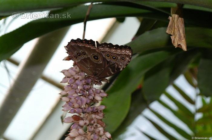 Tropicke motyle v botanickej zahrade Kosice_55