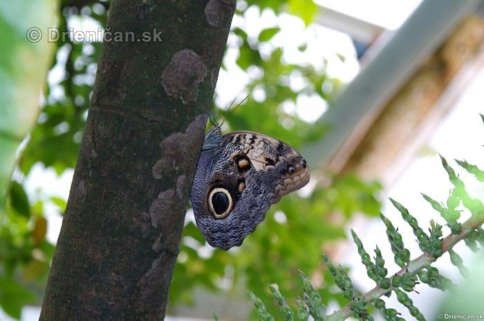 Tropicke motyle v botanickej zahrade Kosice_58