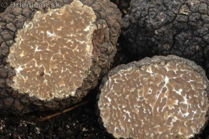 Ako hľadať podzemné huby