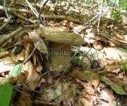 Našli sme ďalšie hríby, 17.jún 2012