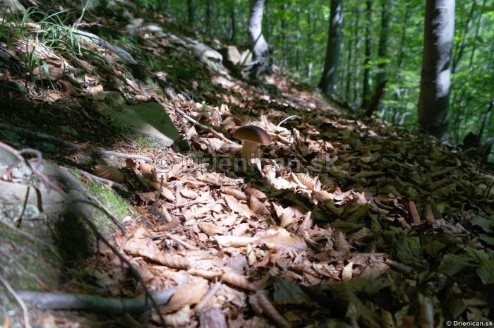 Tieň stromov maskuje hríb v lísti...