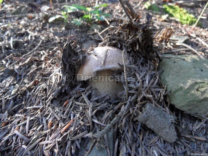 Never ending hobby Mushrooms - Nekonečný príbeh s názvom -HRÍBY !