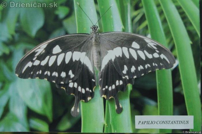 Preparovane motyle zo sveta_02