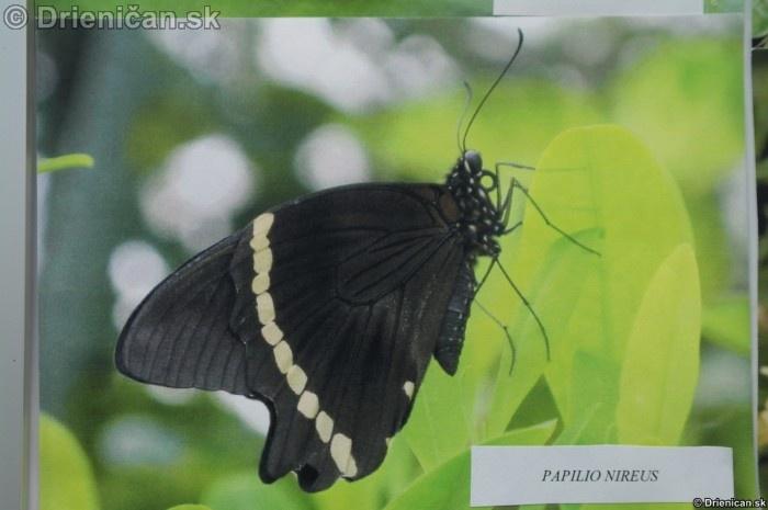 Preparovane motyle zo sveta_07