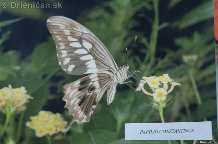 Preparovane motyle zo sveta_08
