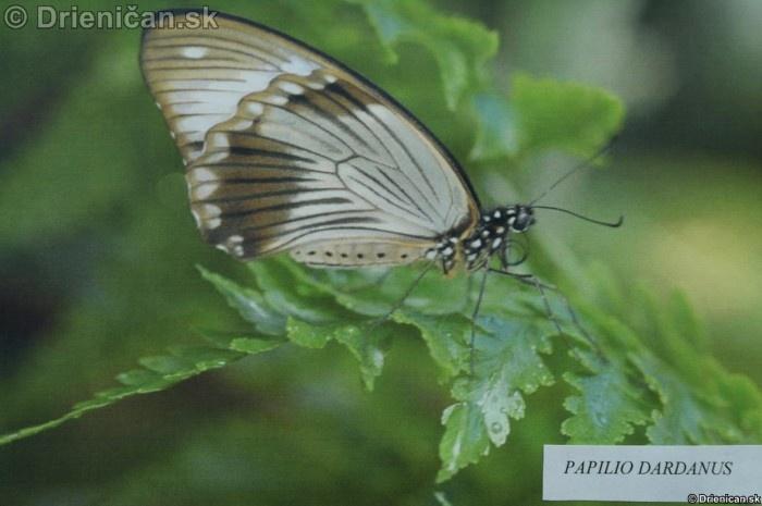 Preparovane motyle zo sveta_15