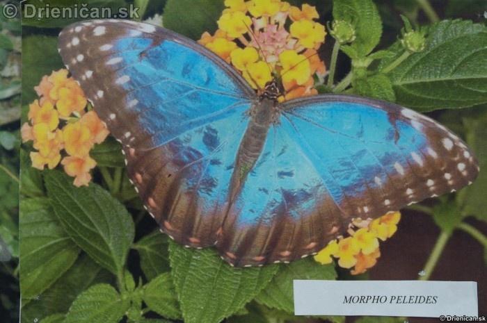 Preparovane motyle zo sveta_20