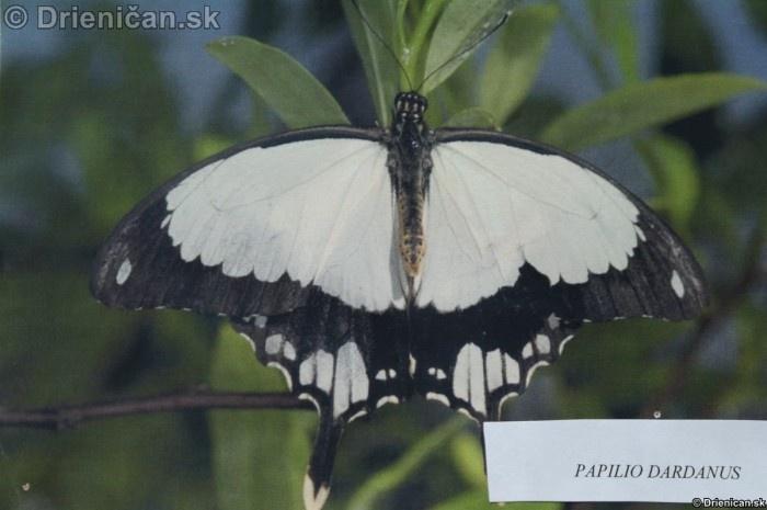 Preparovane motyle zo sveta_23