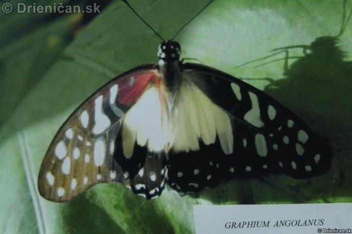 Preparovane motyle zo sveta_25