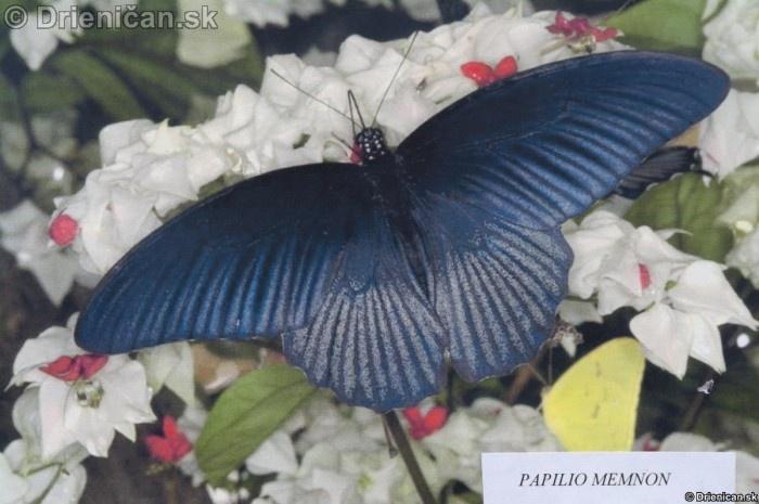 Preparovane motyle zo sveta_26