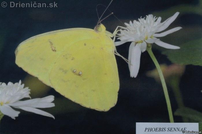 Preparovane motyle zo sveta_35
