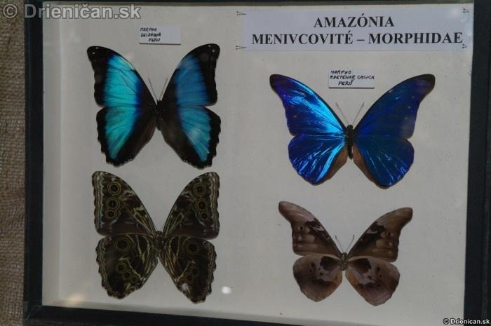 Preparovane motyle zo sveta_37