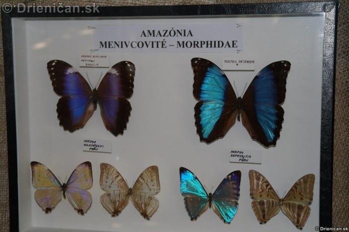 Preparovane motyle zo sveta_39
