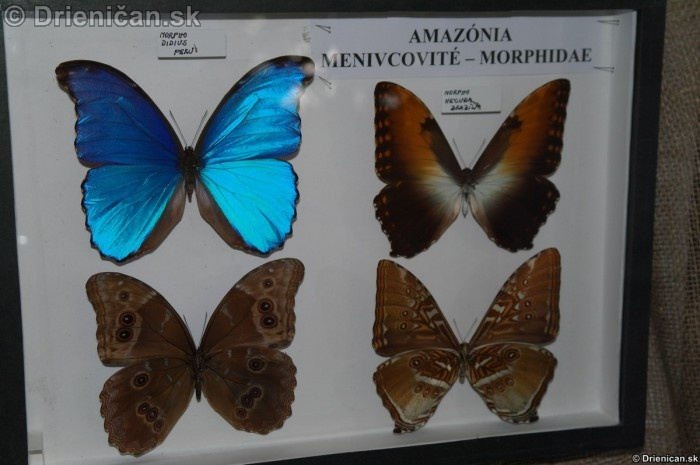 Preparovane motyle zo sveta_40