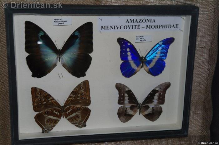 Preparovane motyle zo sveta_41