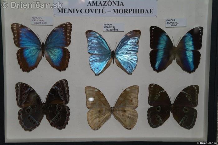 Preparovane motyle zo sveta_42