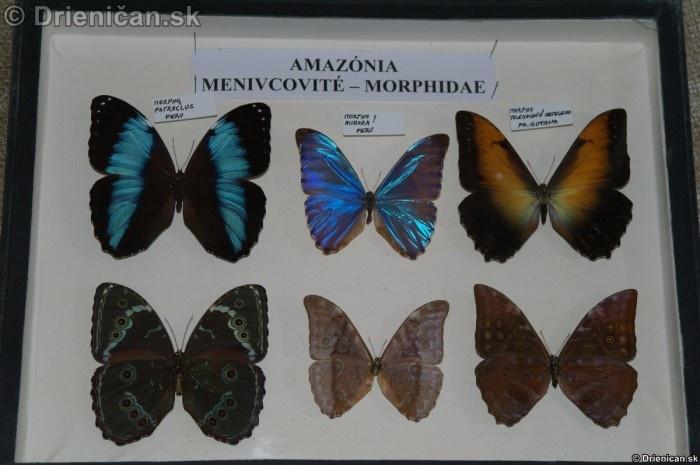 Preparovane motyle zo sveta_43