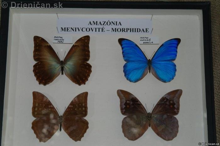 Preparovane motyle zo sveta_44
