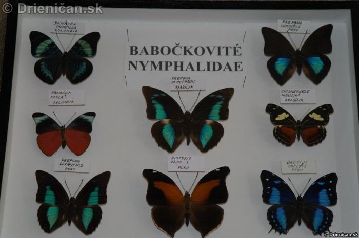 Preparovane motyle zo sveta_45