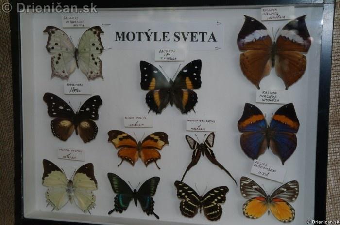 Preparovane motyle zo sveta_48