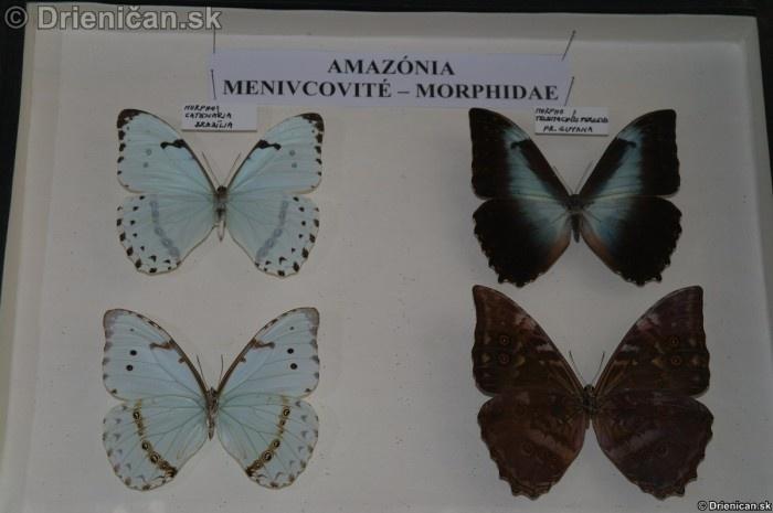 Preparovane motyle zo sveta_50