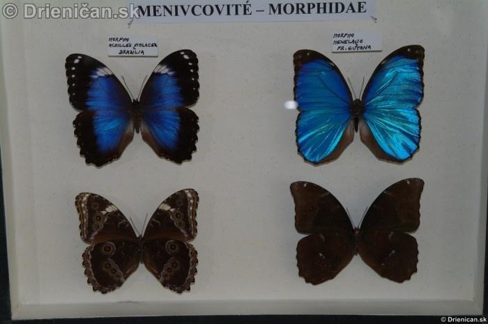 Preparovane motyle zo sveta_51