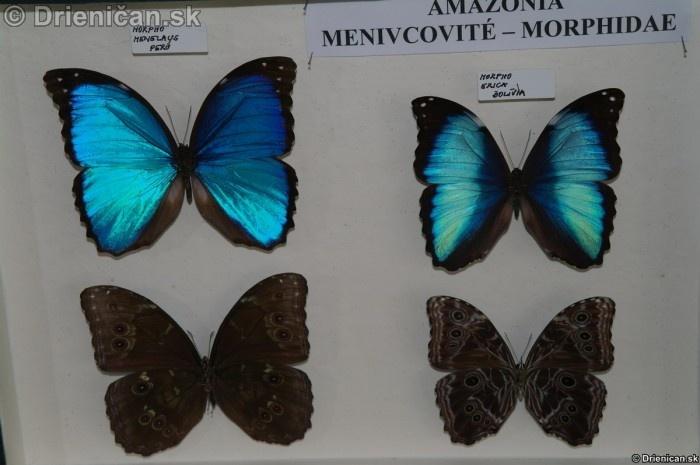 Preparovane motyle zo sveta_52