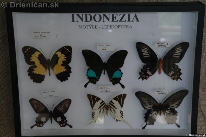 Preparovane motyle zo sveta_54