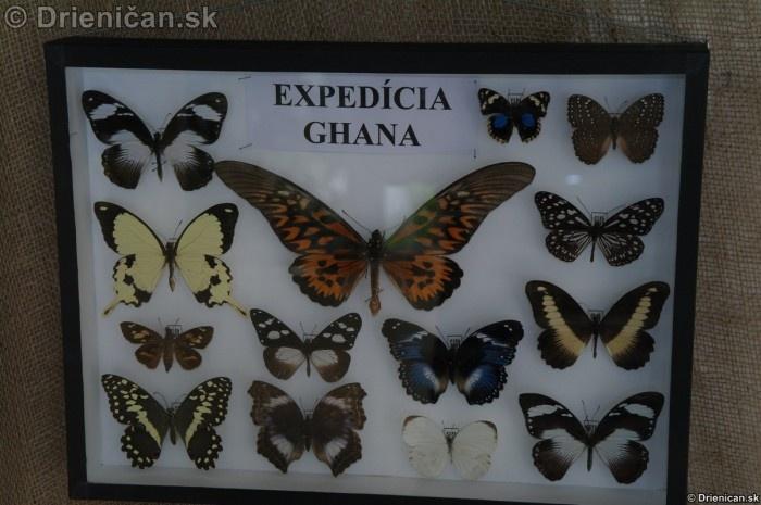 Preparovane motyle zo sveta_55