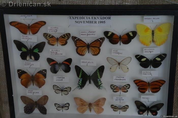 Preparovane motyle zo sveta_56