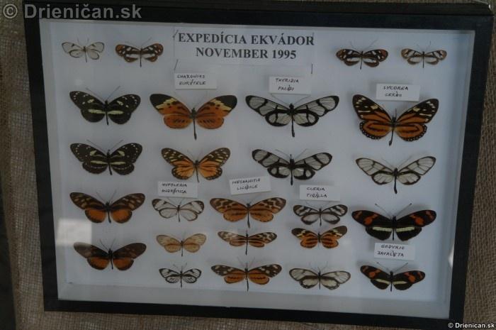 Preparovane motyle zo sveta_57