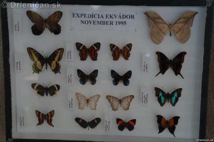 Preparovane motyle zo sveta_58