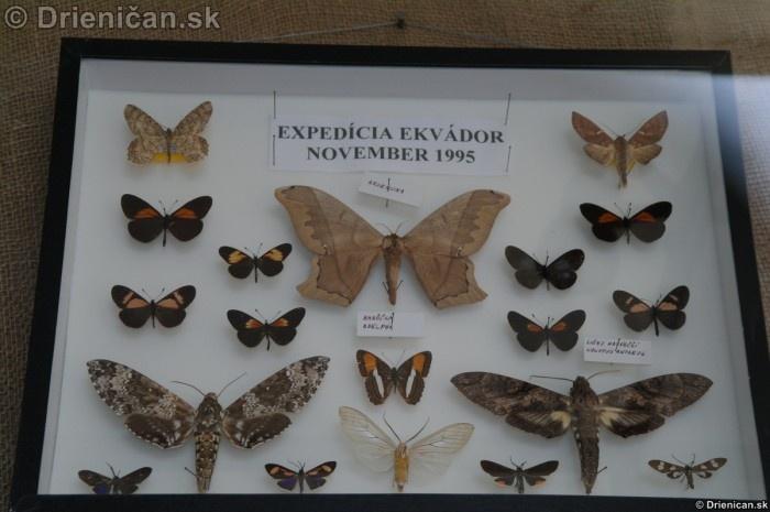 Preparovane motyle zo sveta_59