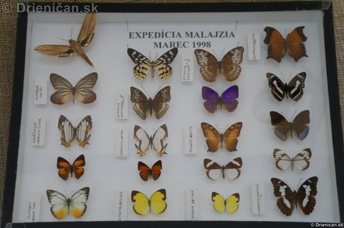 Preparovane motyle zo sveta_61