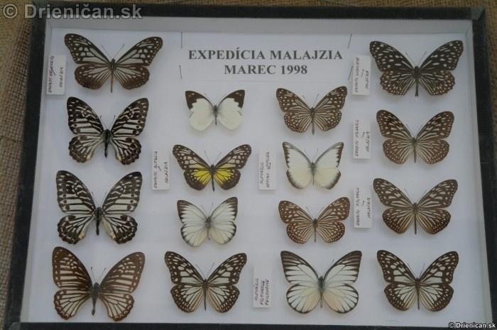 Preparovane motyle zo sveta_62