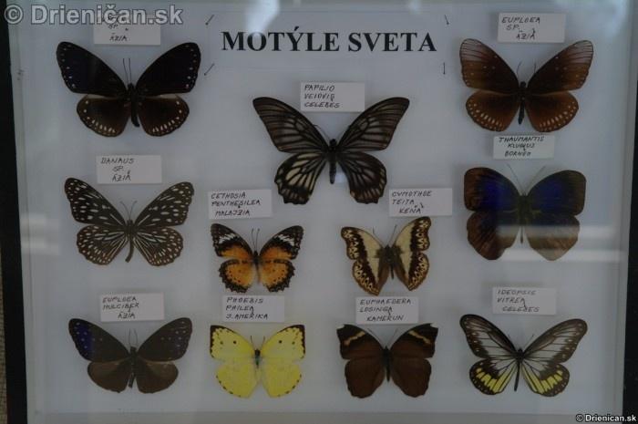 Preparovane motyle zo sveta_63