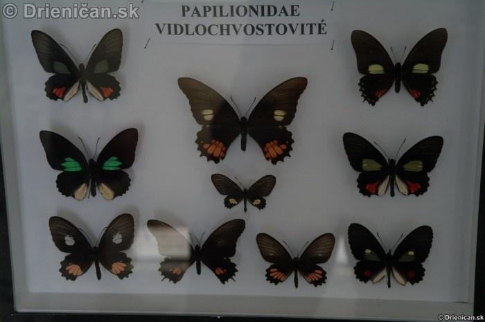 Preparovane motyle zo sveta_65