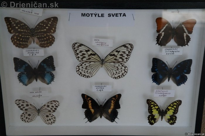 Preparovane motyle zo sveta_67