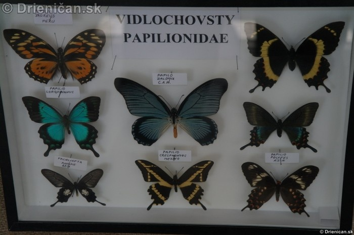Preparovane motyle zo sveta_68