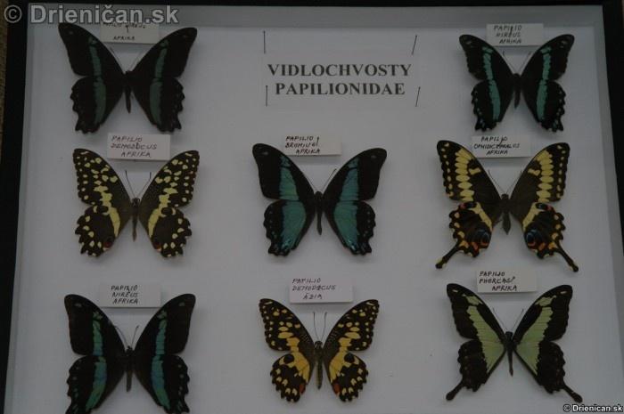 Preparovane motyle zo sveta_69