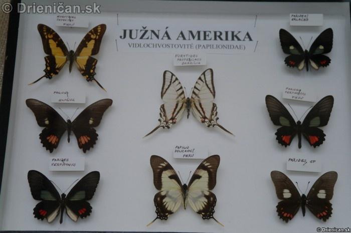 Preparovane motyle zo sveta_72
