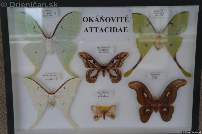 Preparovane motyle zo sveta_74