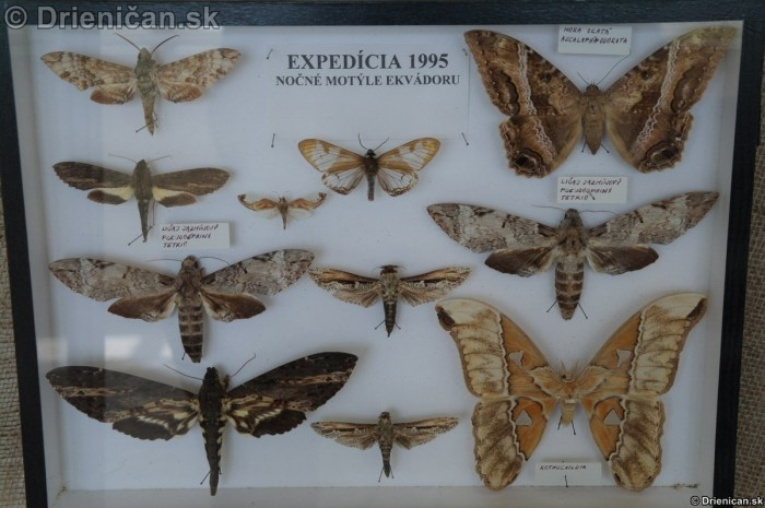 Preparovane motyle zo sveta_77